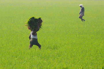 Maharashtra's rabi sowing till mid-November trails by 54%