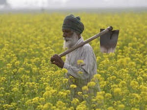 agriculture export policy