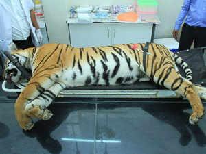Tiger-AFP