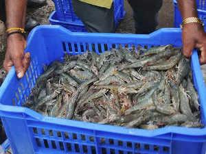 shrimp-agencies