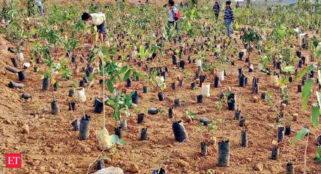 c12bbf012e9cdf Amid dwindling green cover, a Miyawaki forest takes root - The Economic  Times