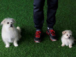 This Chinese Biotech Firm Is Cloning Pet At Rs 40 Lakh The