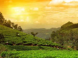 Tea-Thinkstock