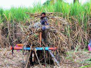 Yet another relief package for sugar companies before elections