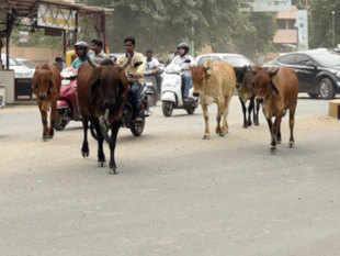 cows-agencies