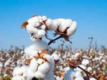 Cotton---Think-stock-1200