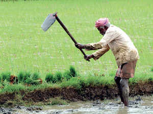 Farmers-bccl3