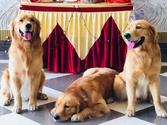 Ruff time: Mumbai airport's 3 therapy dogs abducted; company says ex-employee stole them as revenge
