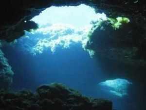 Underground forest (1) (1)