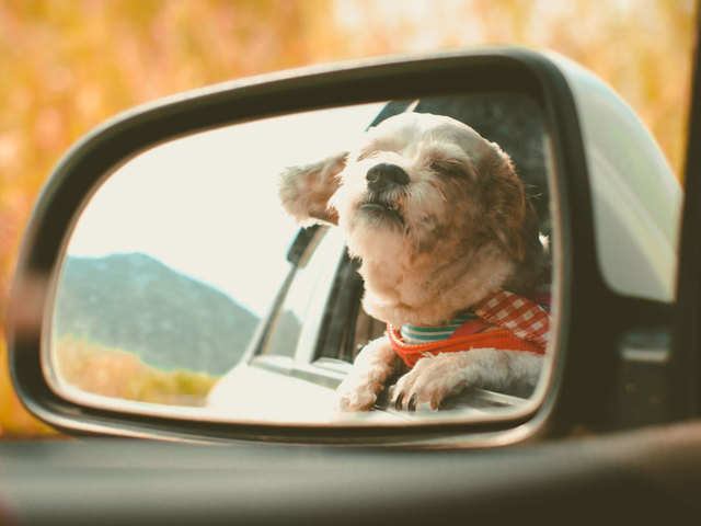 Tesla goes pet-friendly, will introduce 'Dog Mode' to cars this week