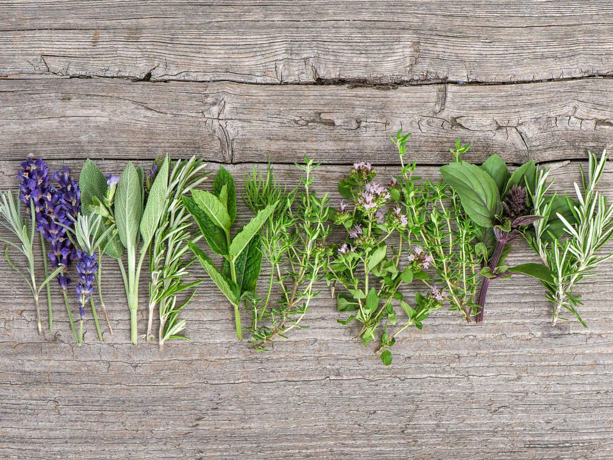 World Kidney Day: Traditional remedy: Herbs like punarnava