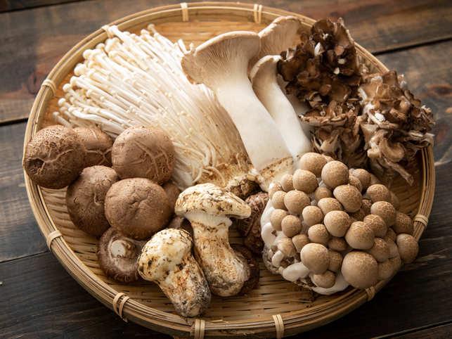 菇 蘑菇 金菇