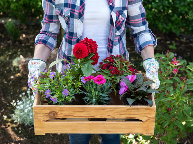 Walking No Time For Gym 10 Minutes Of Gardening Can Also Help