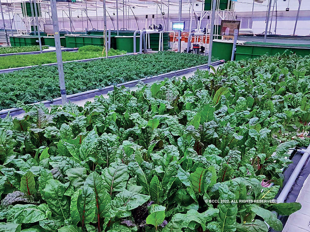 A soil-free success: Aquaponic agriculture on the rise