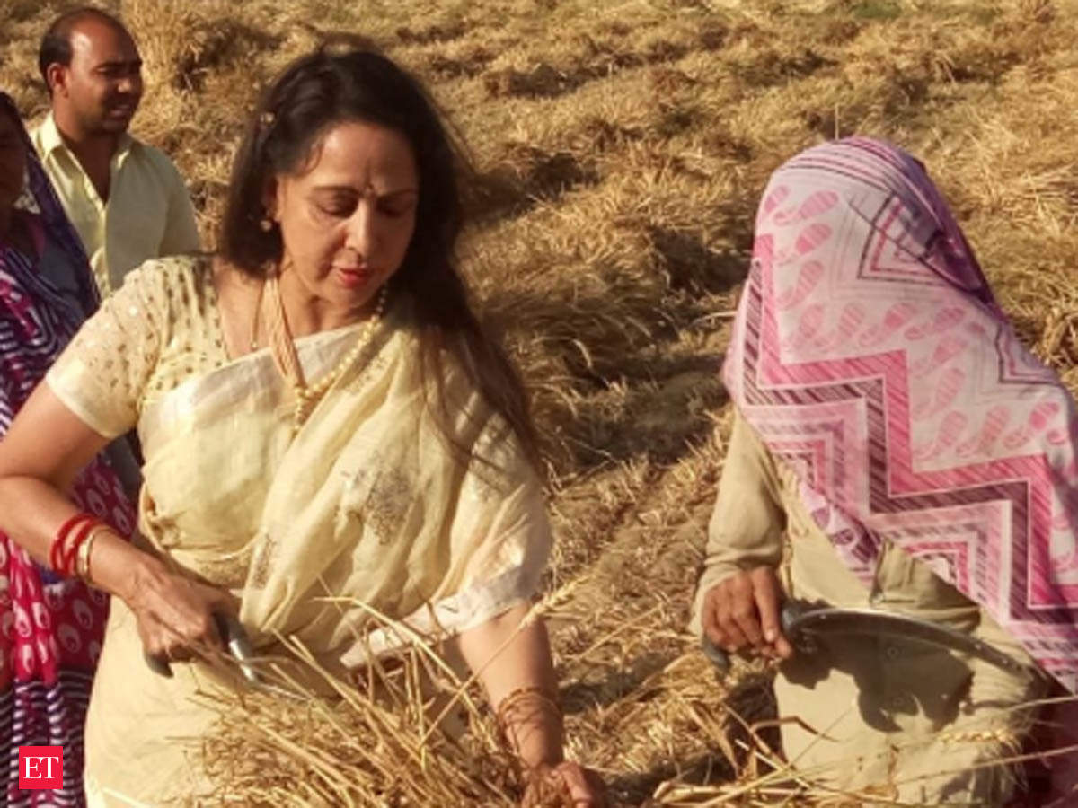 Up Lok Sabha Election Poll Harvest Season Hema Malini Starts Campaigning From Wheat Farms In Mathura With Sickle In Hand