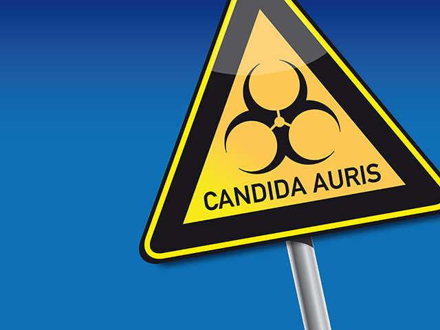 Candida auris infection treatment