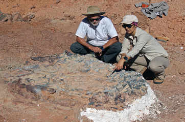 Scientists unearth 220 million-year-old dinosaur fossils in Argentina