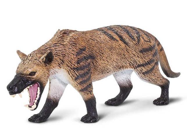 hyaenodont
