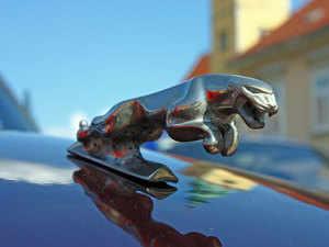 Jaguar---Getty