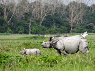 Five species that have been saved due to timely intervention