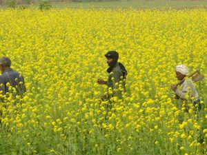 farmers-AFP
