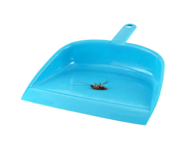 Plastic — candidate for new cockroach
