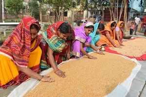 foodgrain production