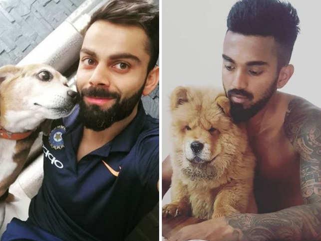 Virat Kohli (L) has named his Beagle, Bruno, and KL Rahul calls his Chow Chow, Simba.