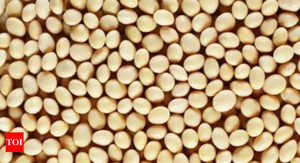 ncdex soybean