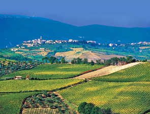 Cerasuolo d'Abruzzo shows why one should not judge a rosé by its colour