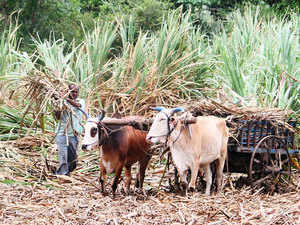 Farming-in-India---bccl