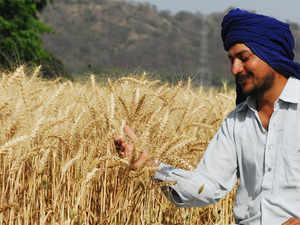 Farmer-Punjab-BCCL