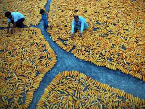 yellow-corn-indi
