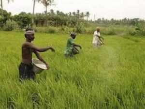 Farm Sector