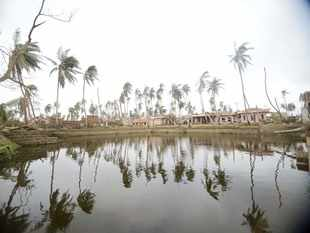 Coconut trees damaged due to Cyclone Fani at Raghurajpur in Puri district.