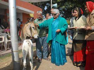 Cow---BCCL
