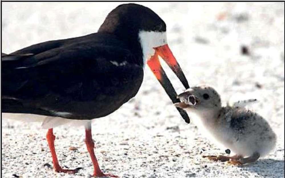 Bird feeds chick cigarette butt in 'devastating' picture