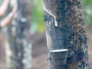 rubber-cultivation