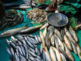 Fisheries sector registered more than double growth in past 5 years; emerged largest group in agri export: Economic Survey