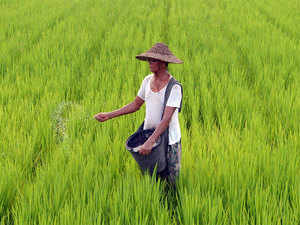Agriculture-Paddy-AFP