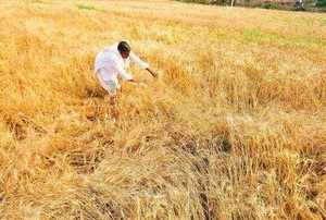 crop insurace
