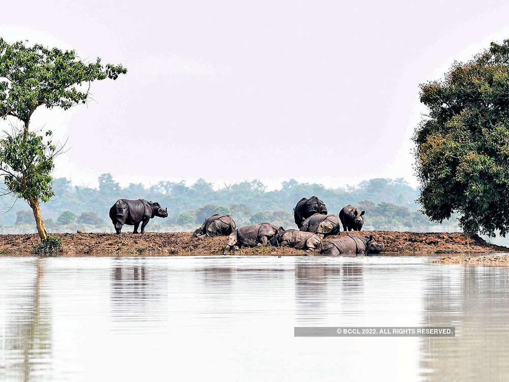 Survival game in Kaziranga: How forest officials, villagers ensure safety of one-horned rhinos