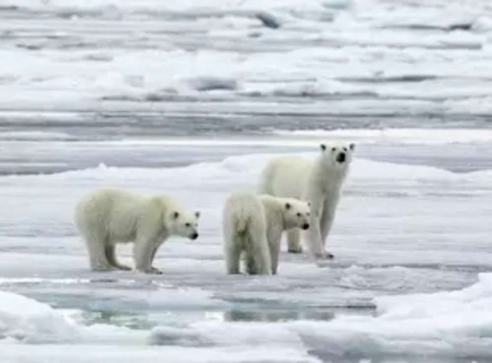 Arctic ocean ice melting faster than normal