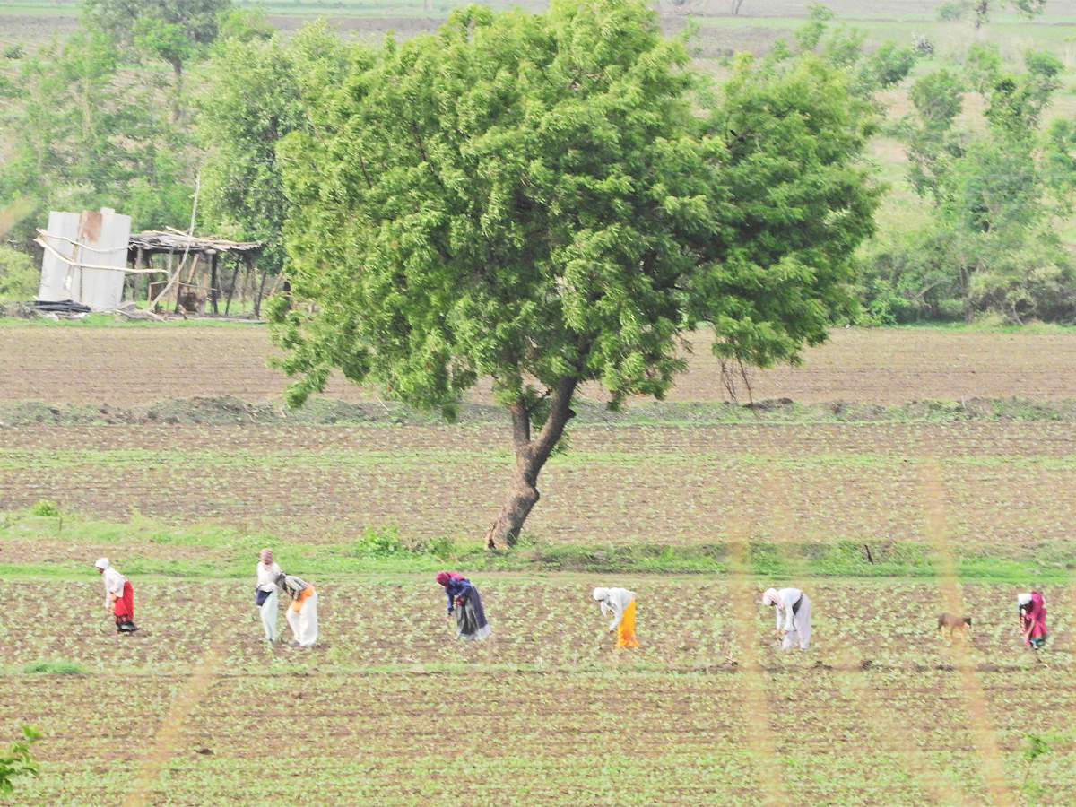 goat farming: Latest News & Videos, Photos about goat farming | The