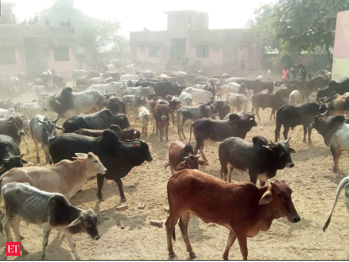 Image result for UP Government provides Rs 900 per month to farmers willing to keep stray cattle
