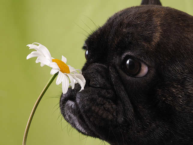 dog-heal-herb_GettyImages