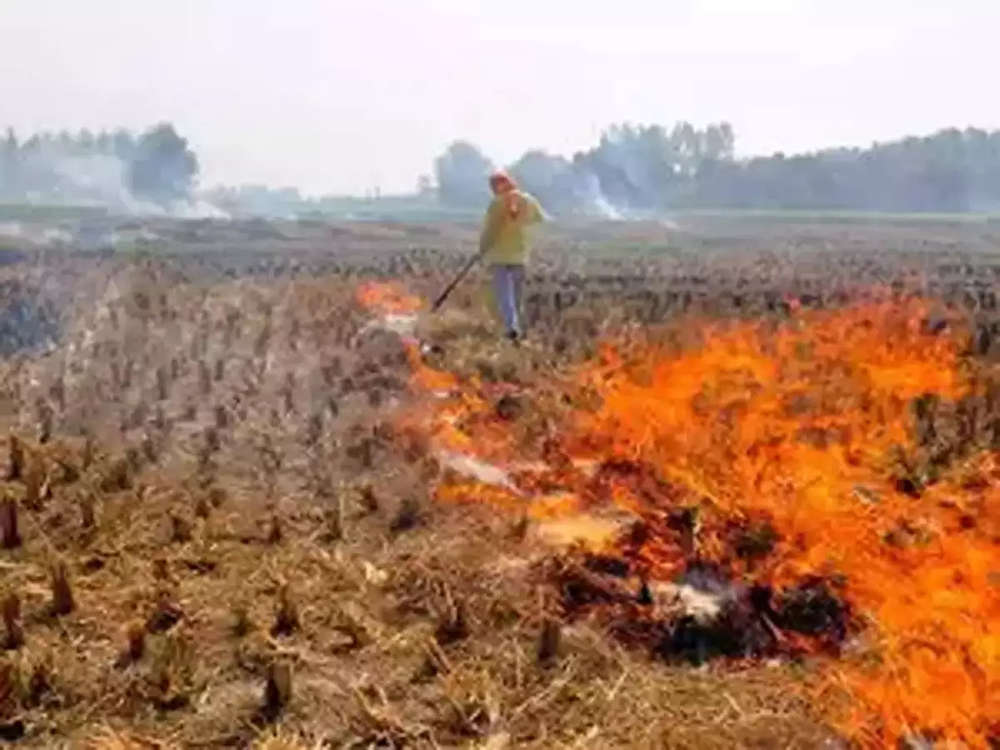 Air pollution due to crop burning set to fall this year