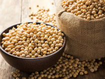 Soybeans may be next market to surge as US showers drag on