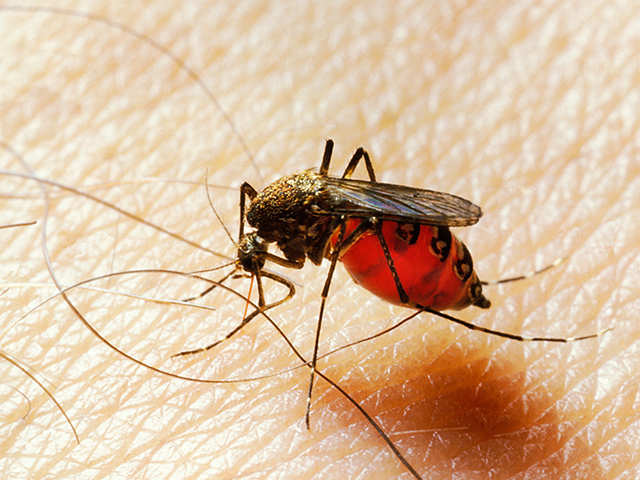Humans too stung by mosquitoes to change