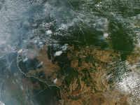 Stop war against nature: Greta Thunberg shares concerns on Amazon rainforest; NASA's pic shocks Alia, Marico boss